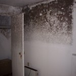 Mold in upstairs bedroom